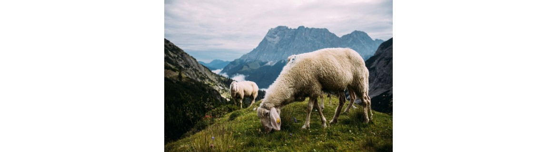 Compra calcetines de lana de la más alta calidad